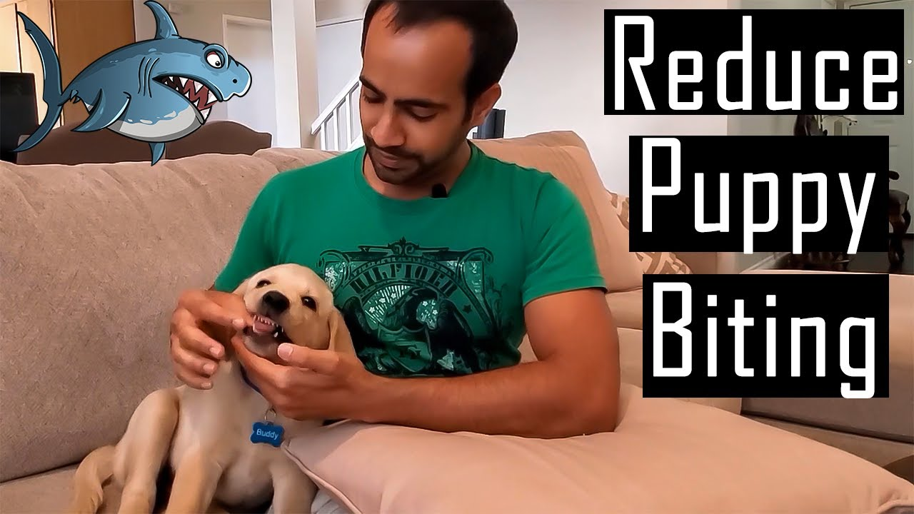 How to Reduce Puppy Biting/Nipping   My Experiences (Hindi with English Subtitles)