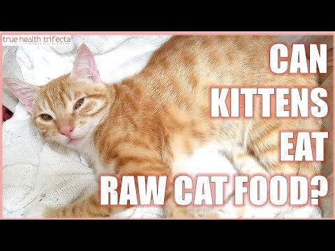 Can KITTENS eat Raw Cat Food? - Cat Lady Fitness