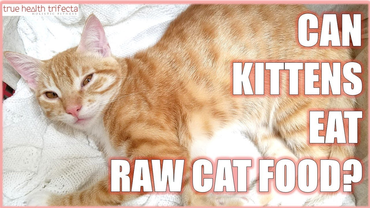 Can KITTENS eat Raw Cat Food Cat Lady Fitness