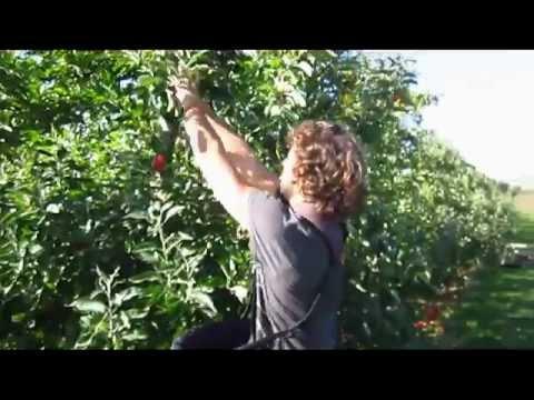 Braeburn Orchard FunHouse