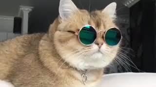 Милый кот в очках под музыку ROCSTAR