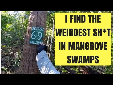 Finding Weird Sh*t Deep in the Mangrove Swamps
