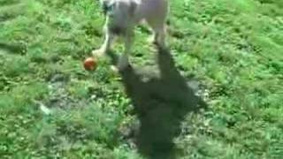 Baixar Barnaby and his Ball