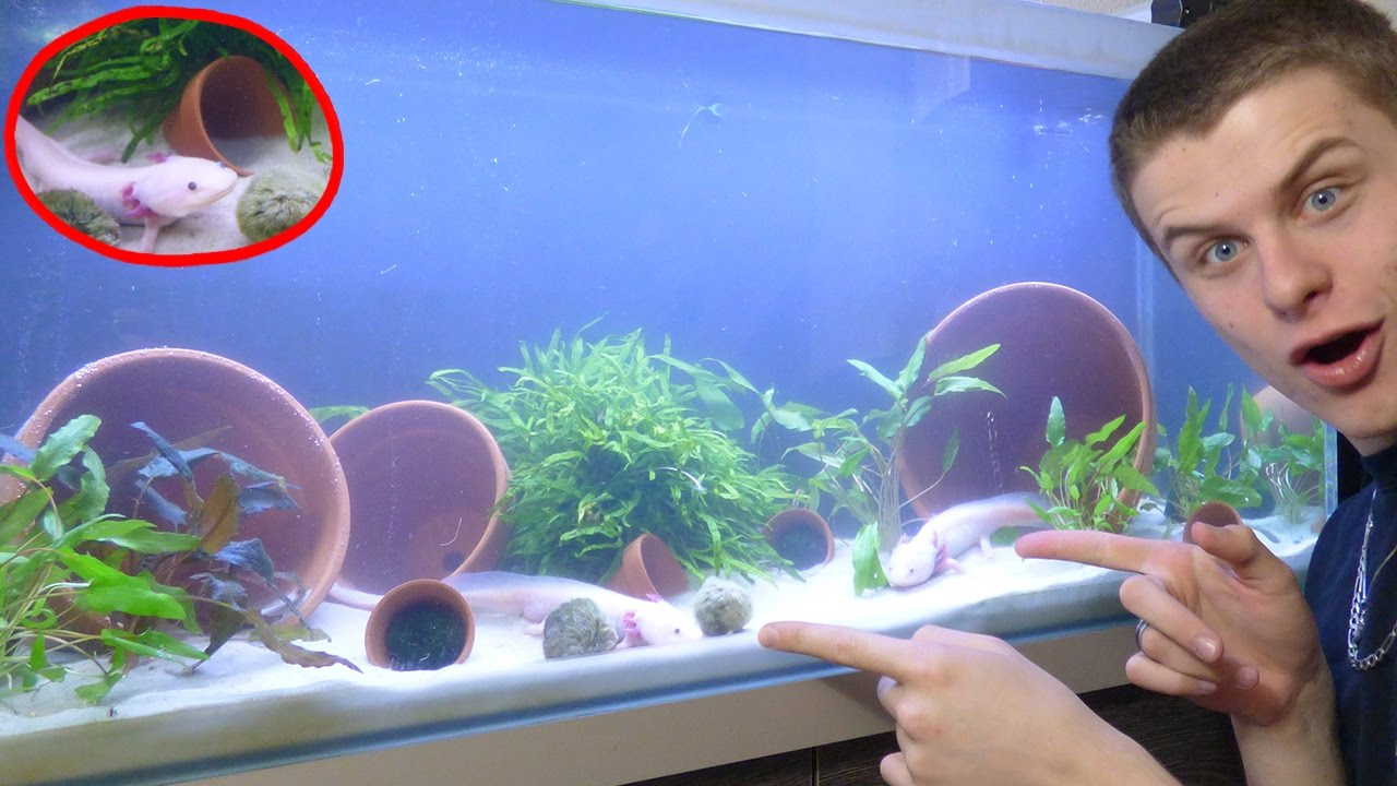tuto axolotl aquarium pour axolotl tuto eublepharis youtube. Black Bedroom Furniture Sets. Home Design Ideas