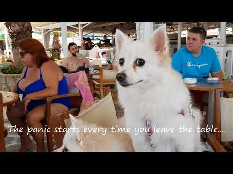 On Holiday With TWO German Spitz -  What To Expect!?