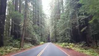 WORLDS GREATEST FOREST HD driving through AVE OF THE GIANTS redwood forest