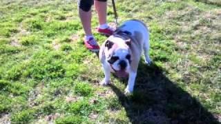 Long Walks & Dog Parks!  1.5.11