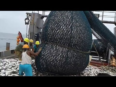 Big Catch in The Sea..You Won't Believe That How Many Fish, Awesome Fish Processing Machine