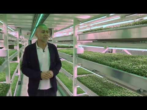 This farm is in an underground tunnel   CNBC International