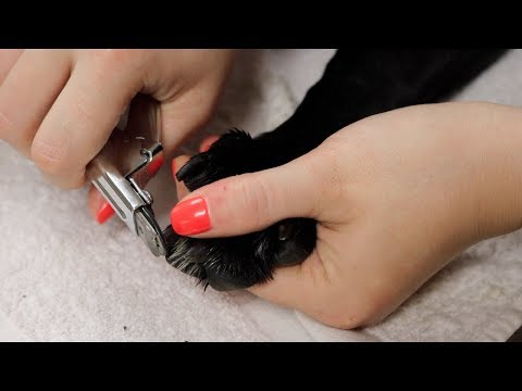 How To: Trim Nails On A Dog Or Cat