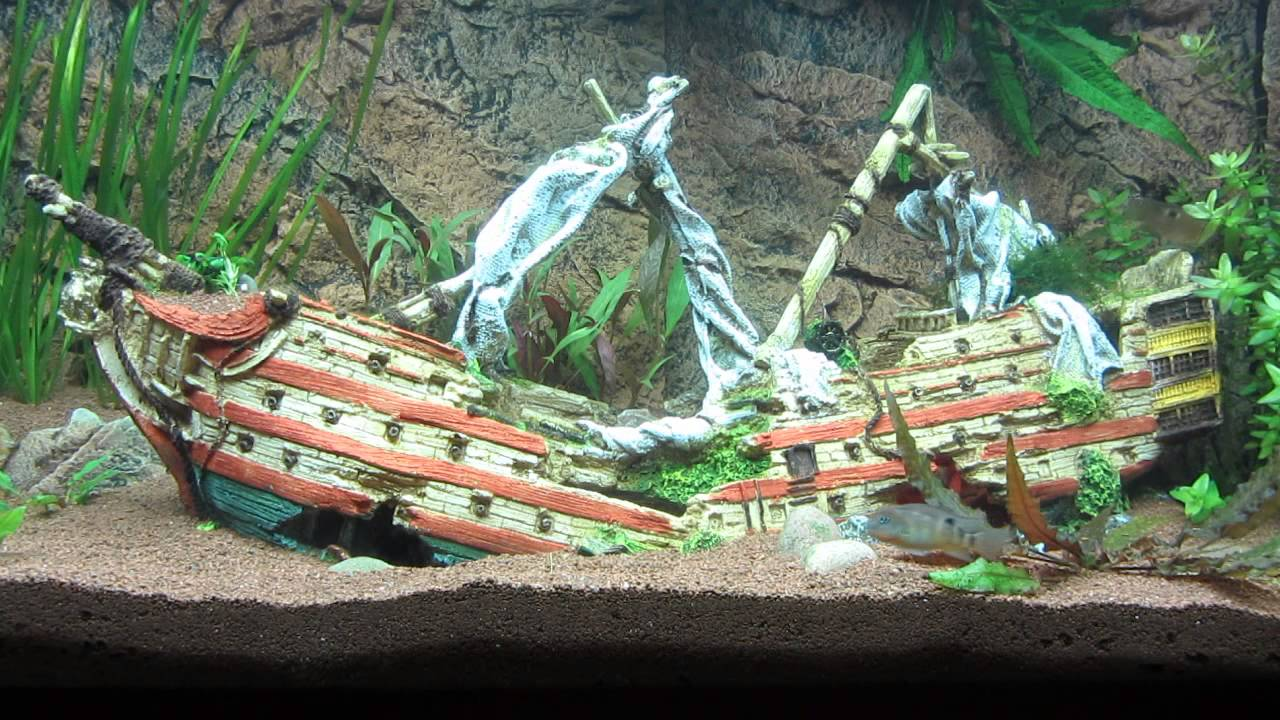 Aquarium mit schiffswrack und buntbarschen fish tank for Aquarium decoration shipwreck