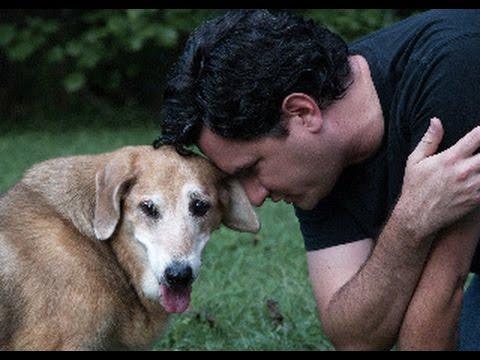 The Dog Counselor, Dean Miller - Episode 1