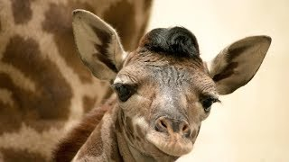 Greenville Zoo Announces Name of Adorable Baby Giraffe | Southern Living