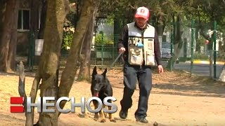 Crean app para pasear perros de manera segura