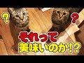 【超簡単】猫さんの水分補給、ちゅーるに少しだけ細工!