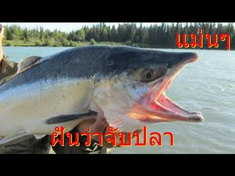 ฝันเห็นปลา ฝันว่าได้จับปลา   เห็นปลาว่ายน้ำ   (เลขเสี่ยงโชค)