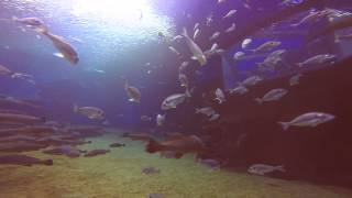 Diving with Sharks- Palma Aquarium and Big Blue Diving Mallorca / updated version 2014