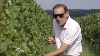 Biodinamicki vinograd - U nasem ataru 756
