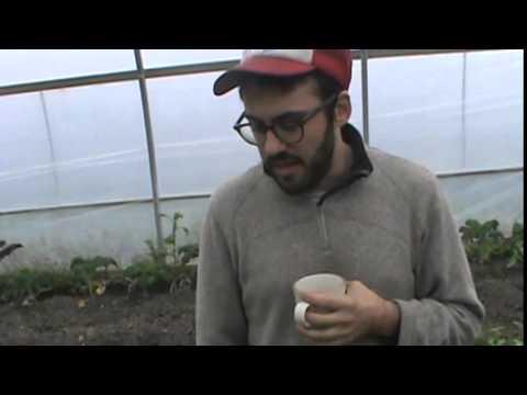 Black Creek Farm - Jane and Steeles