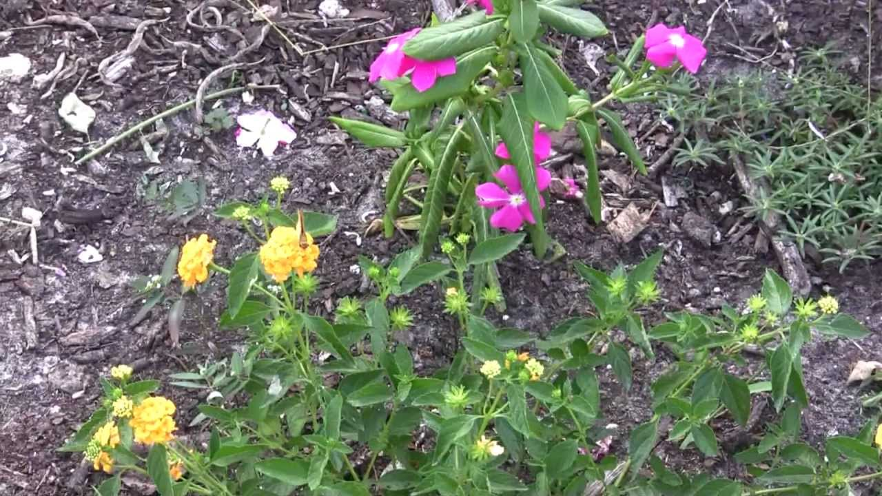 Beau MOSIu0027s Butterfly Garden