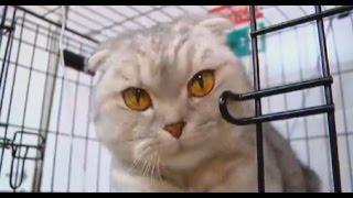 Жители Екатеринбурга спасли кошку, замурованную в бетон