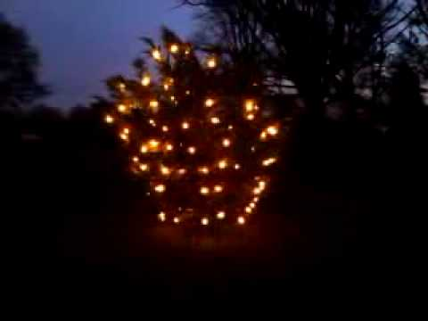 outdoor christmas tree with c7c9 twinkle lights