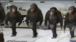 Приколы 2 (2017) г обезьяны танцуют