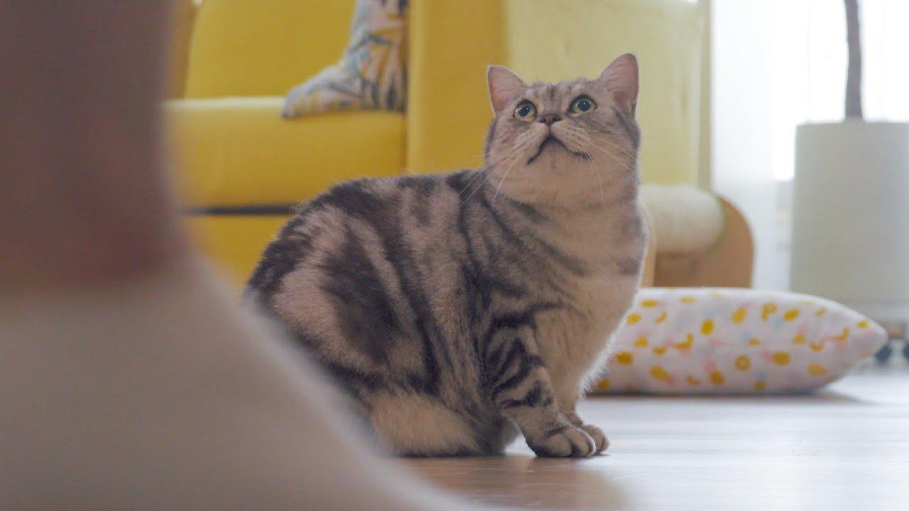 집사가 아파 할 때 고양이들의 반응은?🤕🙀🩹