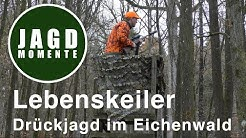 Lebenskeiler - Drückjagd im Eichenwald   JagdMomente   Folge 16