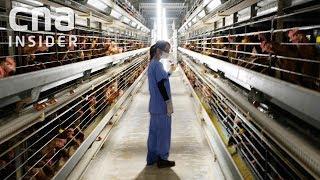 Inside Singapore's Largest Egg Farm