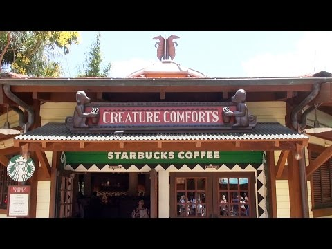 NEW Starbucks at Disney's Animal Kingdom Tour Including You Are Here Mugs; Cupcakes; Treats