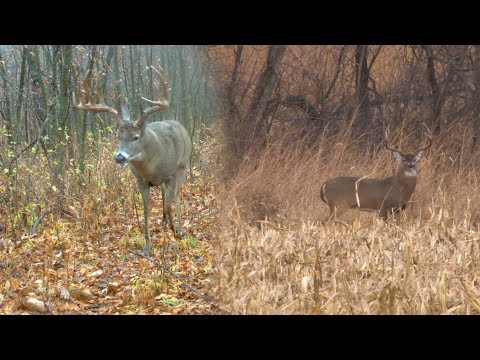"Mark Drury vs 188"" GIANT Typical Whitetail - DODTV Heartbreakers"