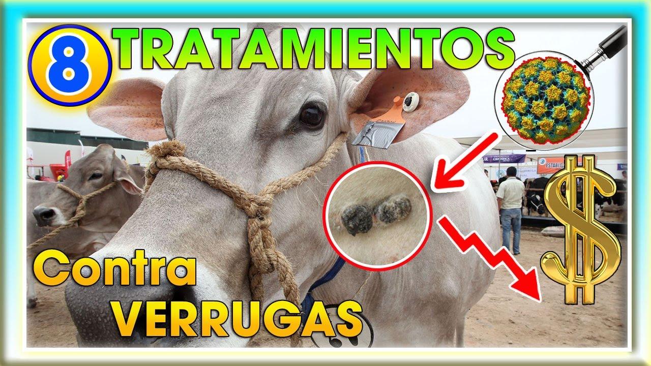 tratamiento de papilomatosis en caballos detox curățare de colon de dieta