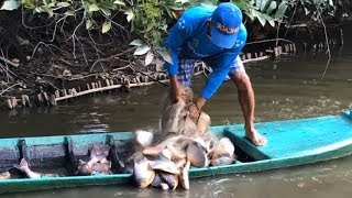 Top 3 Unbelievable Cast Net Fishing GIANT Red Belly Piranhas