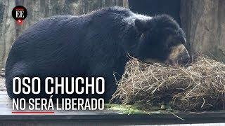 Oso Chucho: ¿por qué no saldrá del zoológico de Barranquilla? - El Espectador