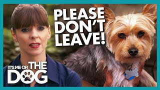 Yorkie Chases Anyone Who Attempts to Leave Him Behind | It's Me or The Dog