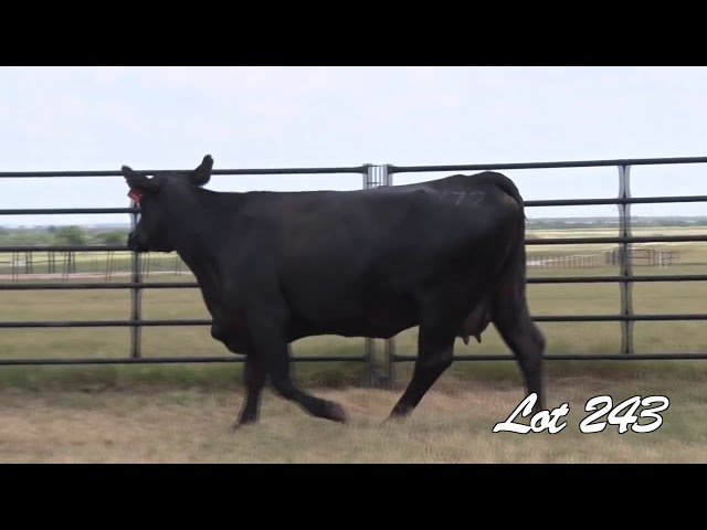 Pollard Farms Lot 243
