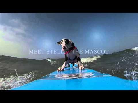 Stella, the Great Dane Surf Dog - San Diego Surfing Academy LLC - GoPro Video