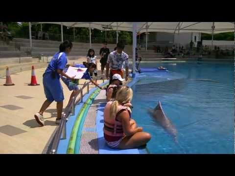 Swim with Pink Dolphins at Underwater World Sentosa Singapore