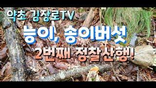 2탄능이.송이버섯 멀지않았다 2탄 정찰산행