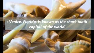Facts and Fun Things to Know about Florida