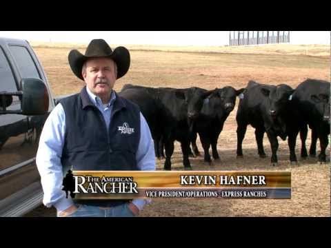 Express Ranches Featured On The American Rancher - February 2013