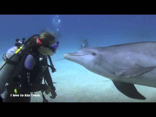 Shark Vs Dolphin