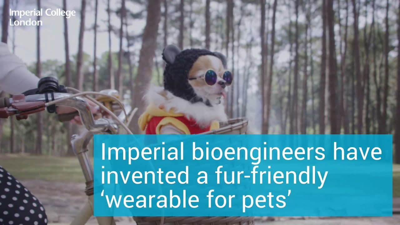Fur-friendly 'wearable for pets' developed at Imperial - Imperial College London