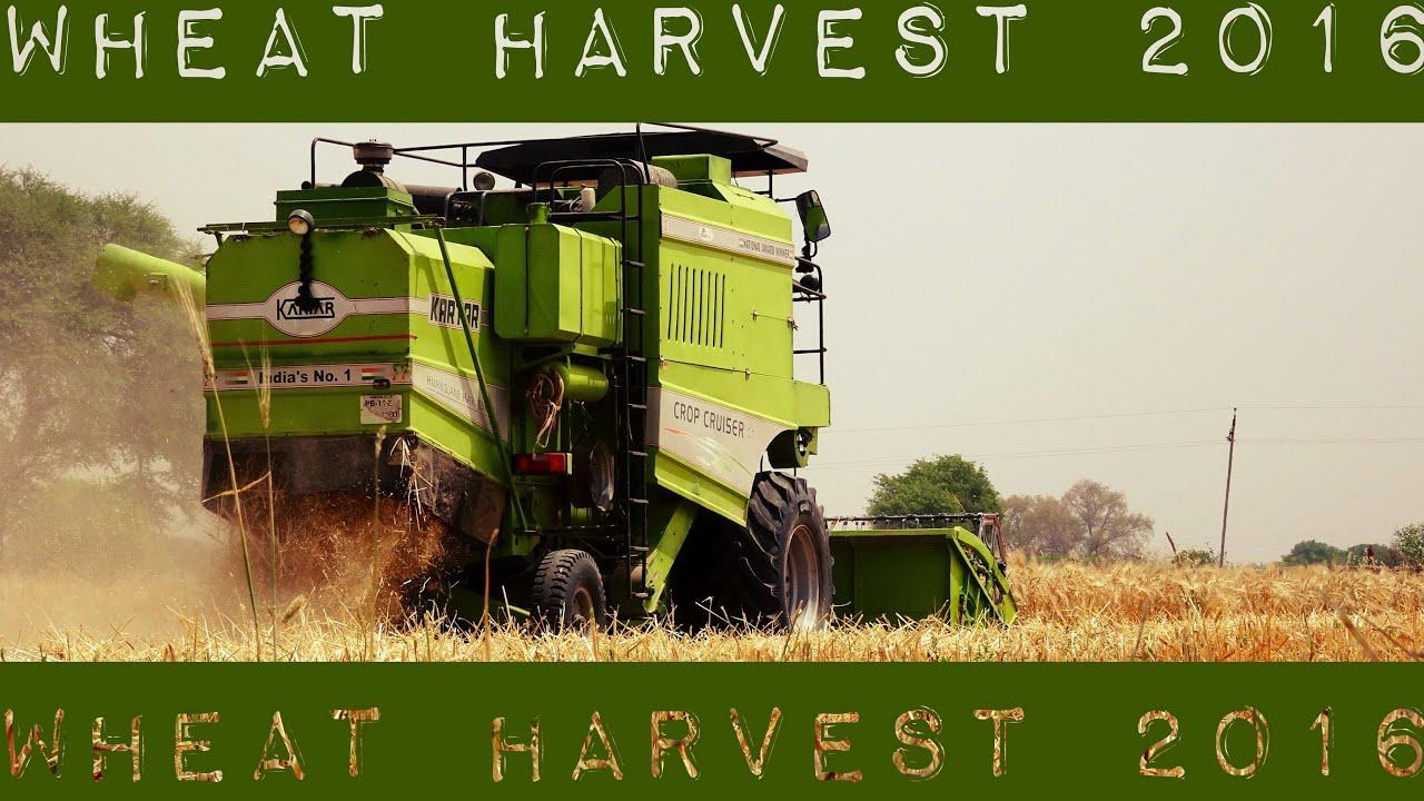 Wheat Harvest 2016 India