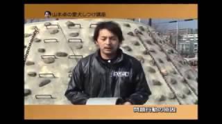 犬の引っ張り癖をしつけ 治し方 引っ張り防止 山本卓 ドックトレーナー 大阪