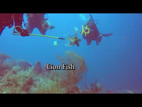 Conch Wall - Drift Dive  8-30-17