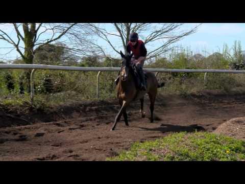 Tracy Piggot Meets Willie Mullins (Part 1) | RTÉ Racing