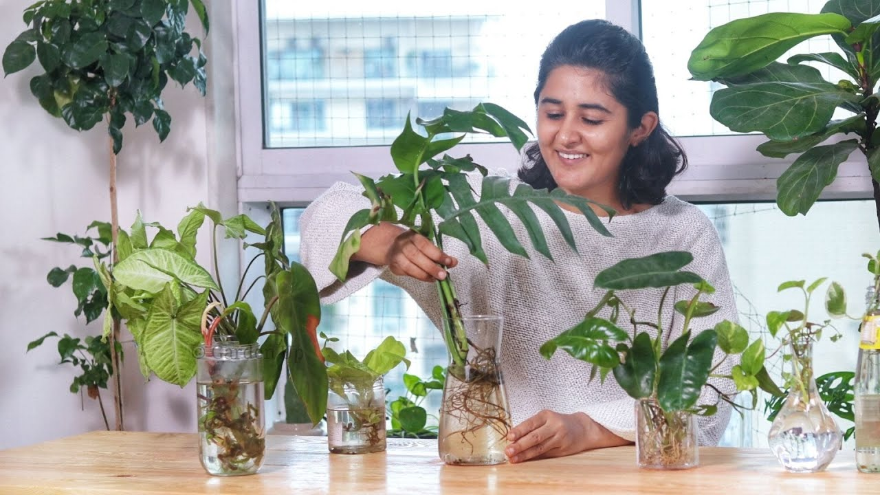 Propagate Indoor plant cuttings in water with me| Garden Up