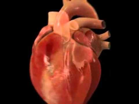 Movimientos del corazon  YouTube